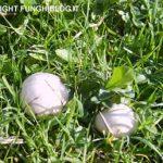 Foto: di funghi prataioli