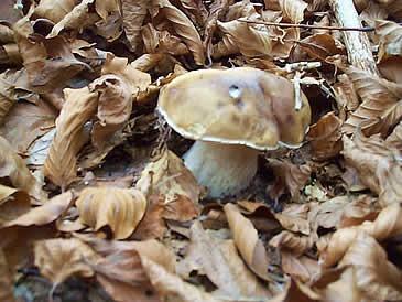 camminare piano quando si cercano funghi