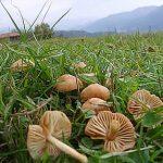 Funghi che adoro i gambesecche utili in mille modi nelle ricette con i funghi in autunno !