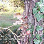 Famiglia di funghi chiodini cresciuta in alto su un albero